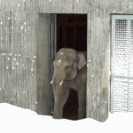Zoo Closes for Snow, Then Camera Catches Baby Elephant Totally Losing It With Joy.