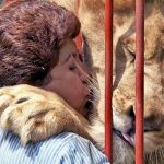 Lion starts crying and gives a big hug to woman who saved him. Watch their emotional reunion.