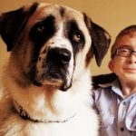 The incredibly moving story about a disabled boy and his disabled dog.