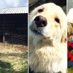 Mama dog is depressed when 7 puppies die in barn fire. Then they show her a litter of orphans.