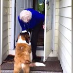 Old widow is lonely after husband dies, then finds neighbor's new puppy standing at her door.