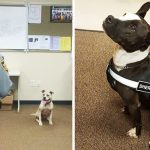 These cops are so proud their newest K9s are rescue pit bulls.