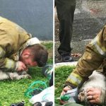 Firefighter giving CPR to a puppy rescued from a burning apartment will restore your faith in humanity.