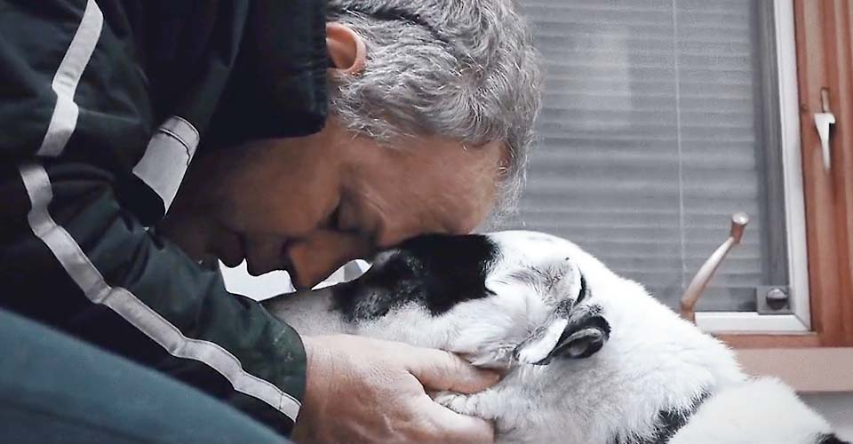 This beautiful tribute to a dog and his man just might move you to tears.