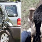 Woman crashes car on rural road. Then stray dog comes out of nowhere to rescue her.