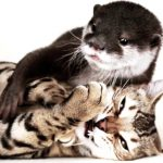 The unlikely friendship between an otter and a Bengal cat will make your day.