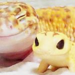 This gecko can't stop smiling when he's around his toy gecko, and their pics will make your day.