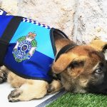 Police dog gets fired for being too friendly, later receives an even better job offer.
