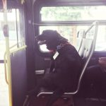 Dog gets on the bus alone, then commuters realize note around her neck is a bus pass.