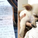 Woman finds puppy abandoned in airport bathroom, then reads owner's note about boyfriend's abuse.