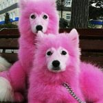 Abused puppies dyed pink and left for dead, then volunteers spot them in forest.