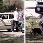 War veteran gets out of his car, loses it when he sees his two lost dogs.