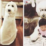 This little Japanese girl and her pet poodle will make your day.