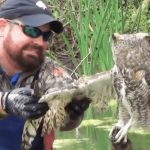 This owl is trapped and exhausted… but watch the unexpected reaction when a man tries to help.