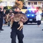 Cops honor loyal K-9 officer with touching goodbye.