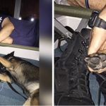 Rescuer holds hands with K-9 partner while they nap during hurricane.