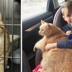 Little boy picks huge elderly marmalade cat after mom says he can adopt any pet in the shelter.