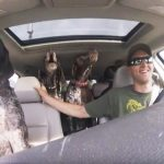 Car full of dogs freak out when they learn they're going to the park.