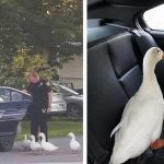 Four ducks go out for a night to party, end up getting arrested.